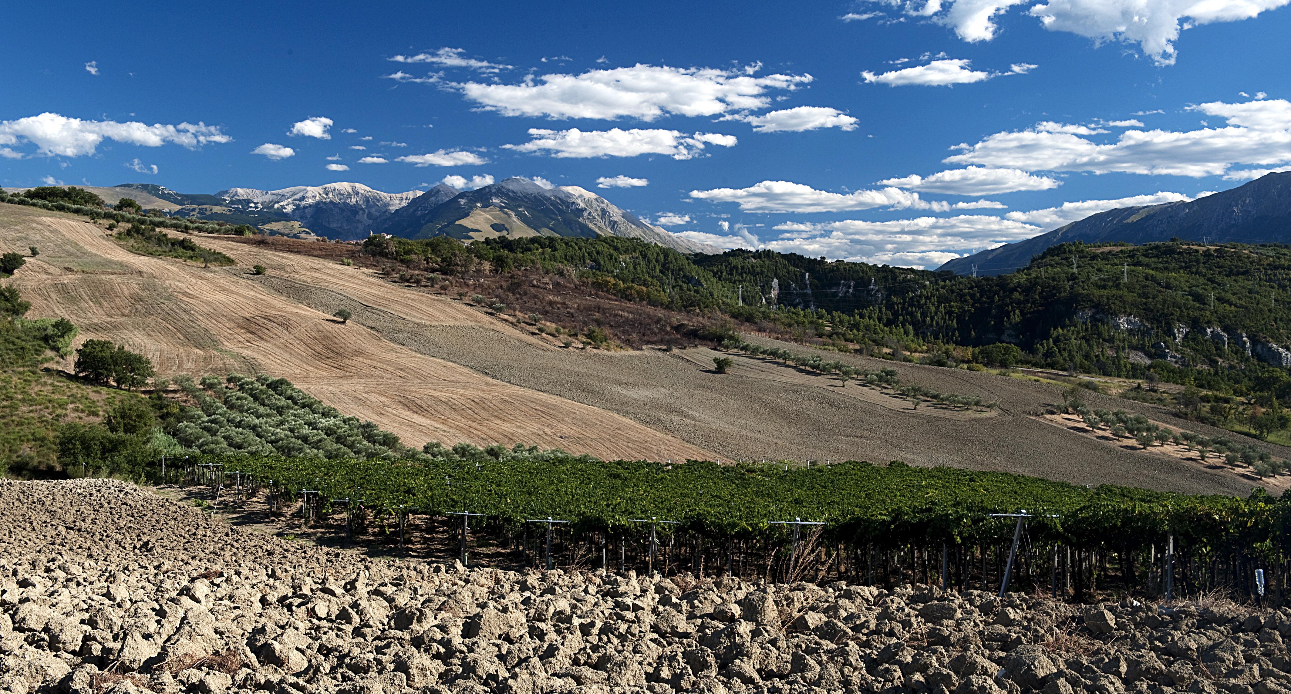 La Valentina_BINOMIO vineyard_2016