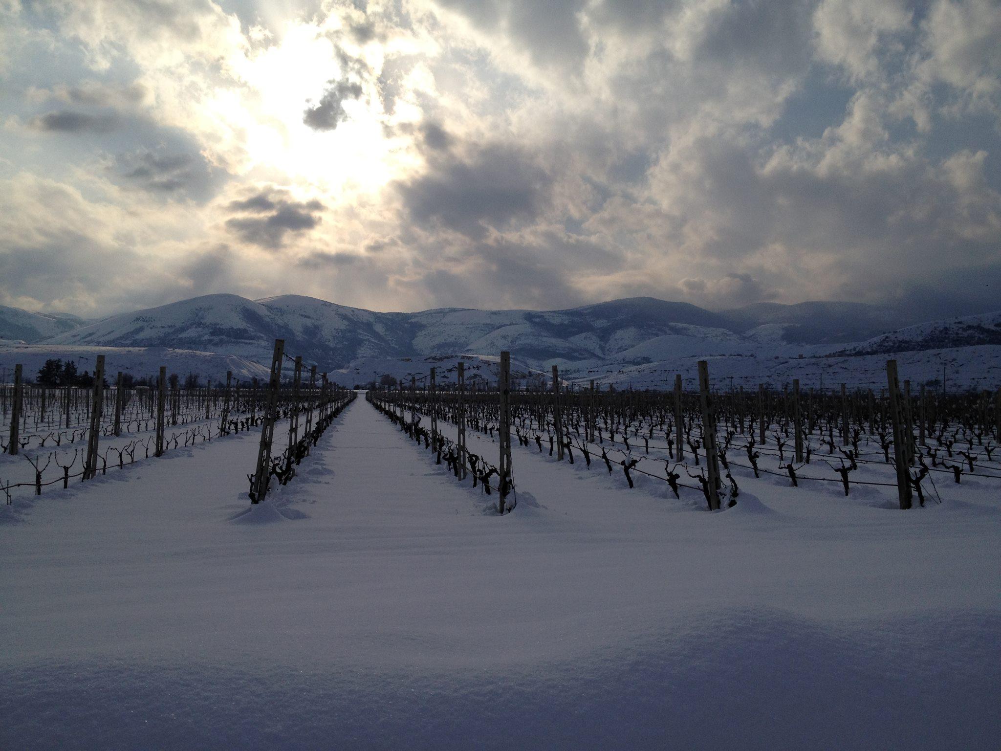 foto vigna neve 2012