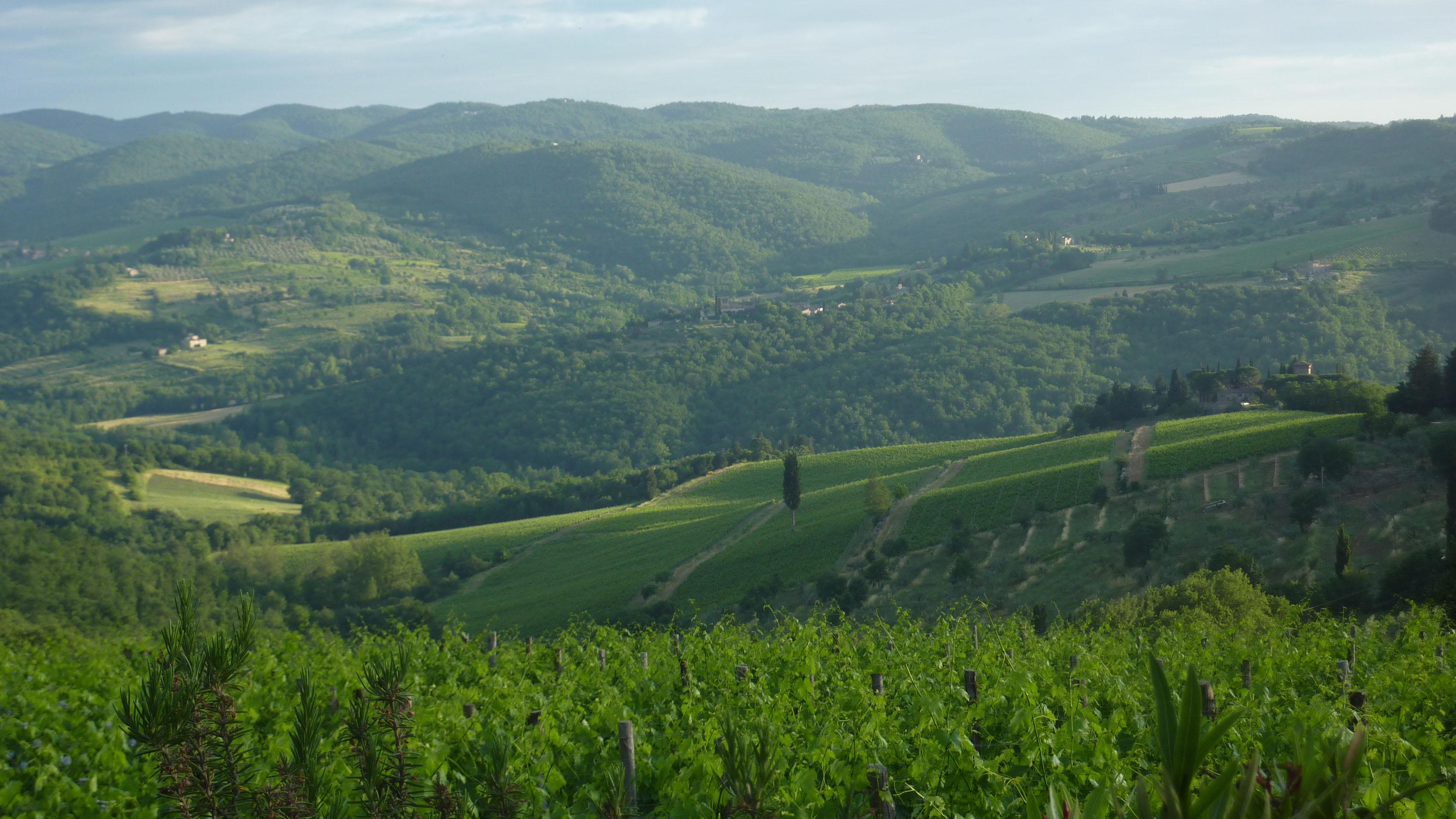 panzano-in-chianti_fototeca-unione-viticoltori-dii-panzano-2