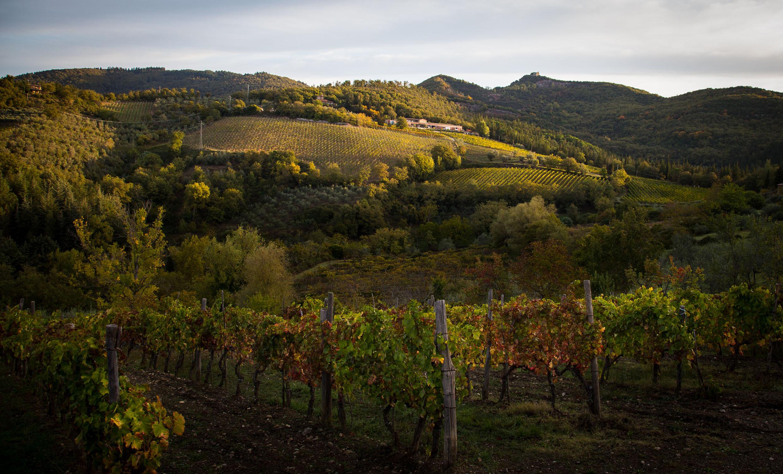 riecine_la-cantina-e-le-vigne-2
